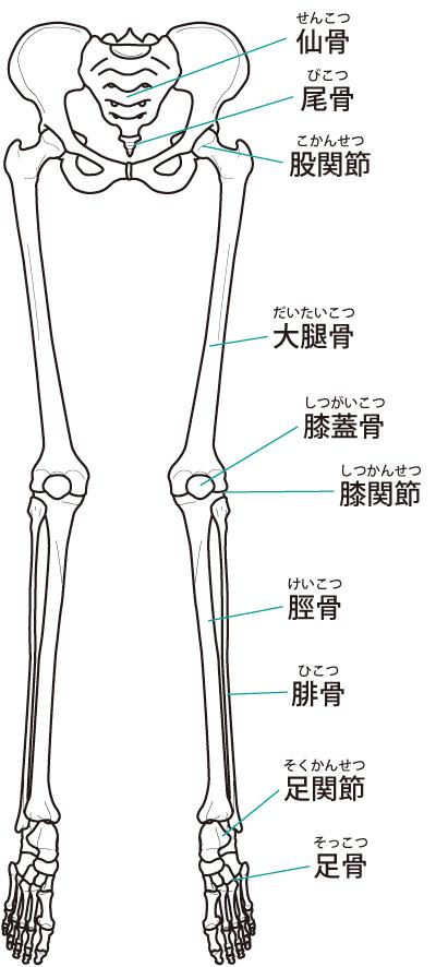 当院の足底筋膜炎へのアプローチ